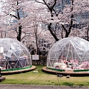The Big Business of Japan's Cherry Blossoms