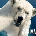 Animal Selfies Come to the Rescue in WWF Japan Campaign