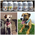 Fargo Brewing Company Puts Adoptable Dogs' Faces on Beer Labels