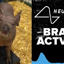 (Video) Elon Musk Shows Off Neuralink's Brain Implant in Pigs