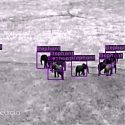 (Video) AI Software Created for Drones Monitors Wild Animals and Poachers - Neurala