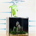 EcoQube C Fish Tank Uses a Plant to Clean its Water
